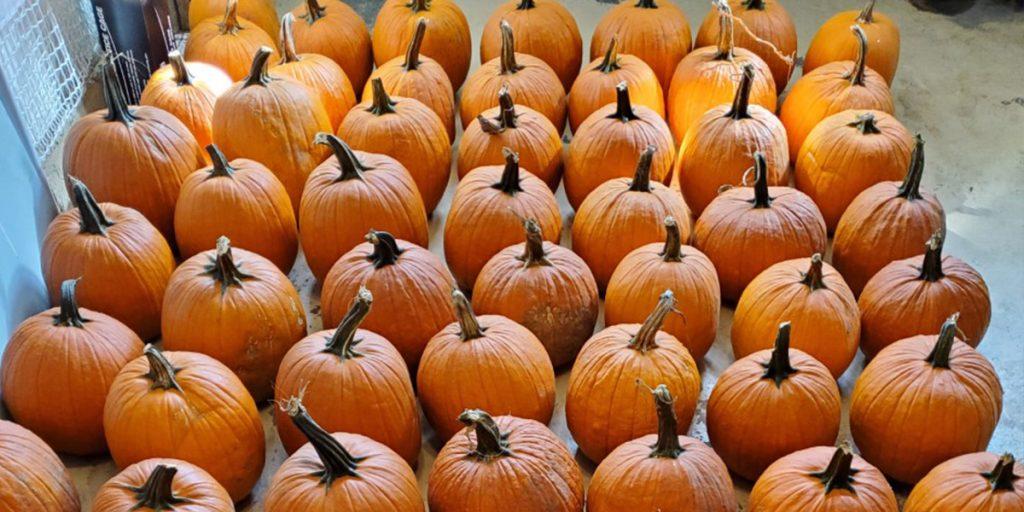Oct2019-PumpkinQueen_3